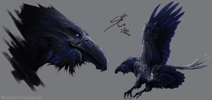 crow bird concept art by sally gottschalk