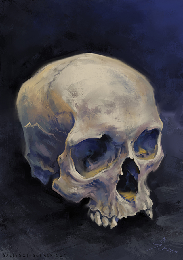sally gottschalk skull study human anatomy nigreda illustration