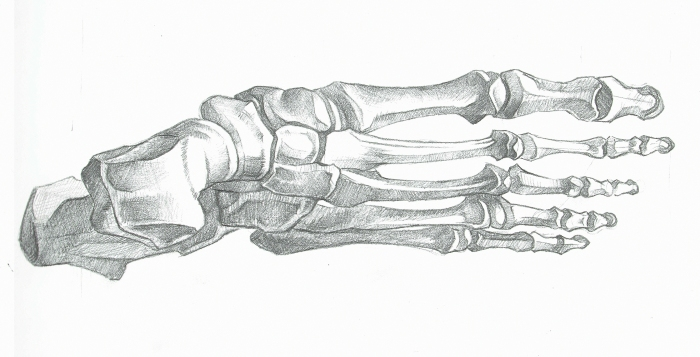 Anatomy Study - Feet