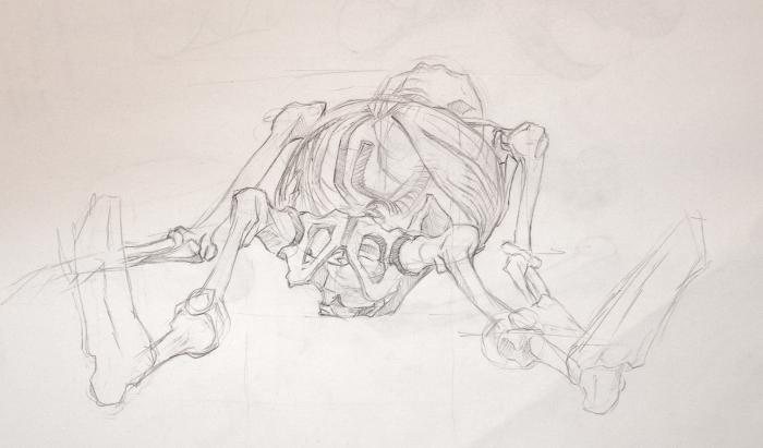 Anatomy Study - Skeleton Sketch