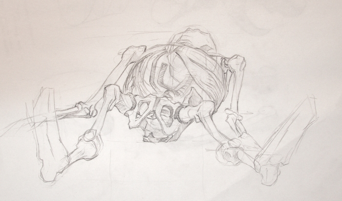 Anatomy Study - Skeleton Sketch