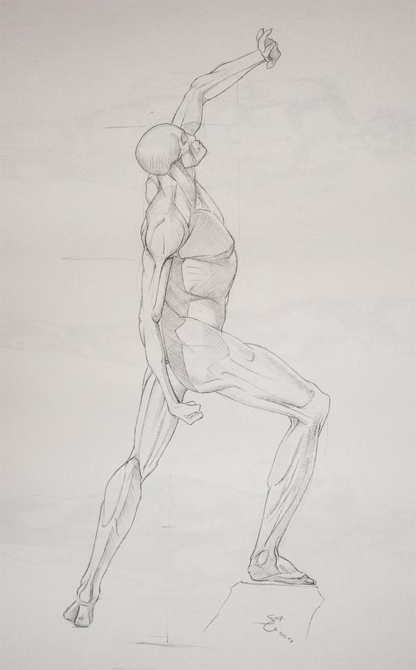 Anatomy Study - Male