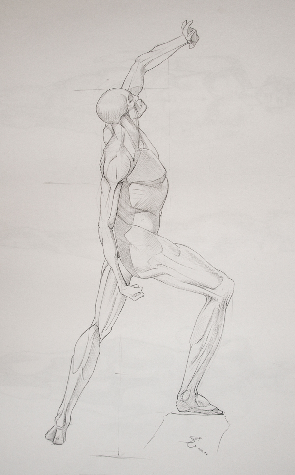 Anatomy Study - Male