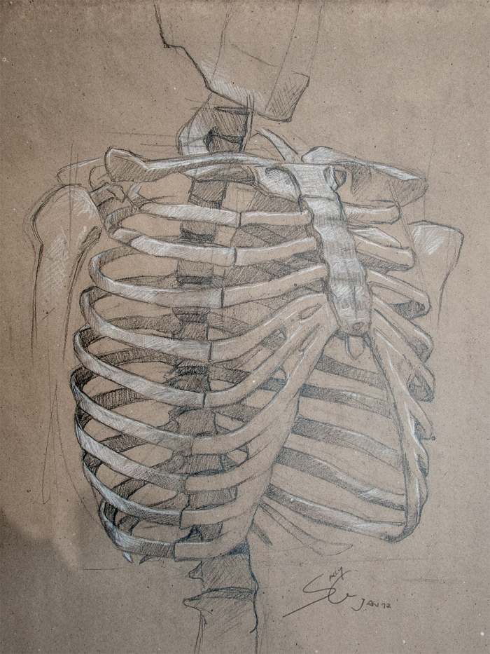 Anatomy Study - Rib Cage