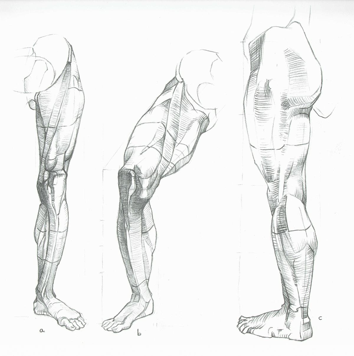 Anatomy Study Syn Studio Sally Gottschalk Nigreda