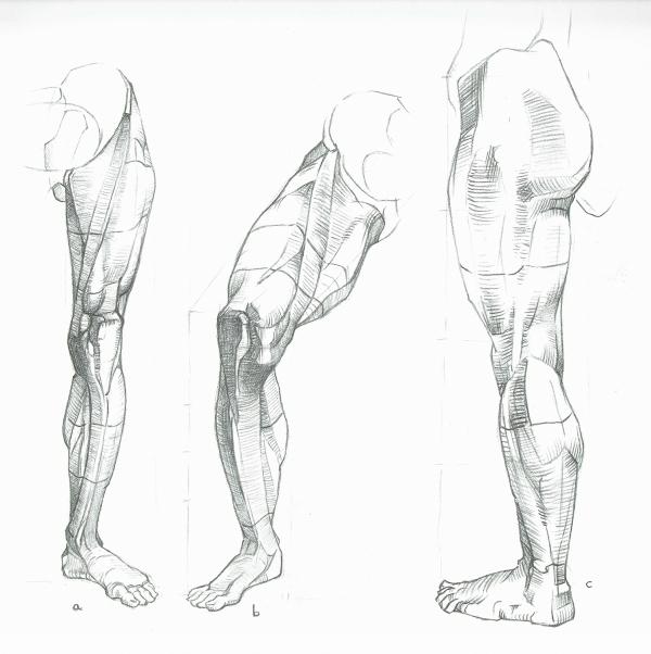 Anatomy Study - Legs