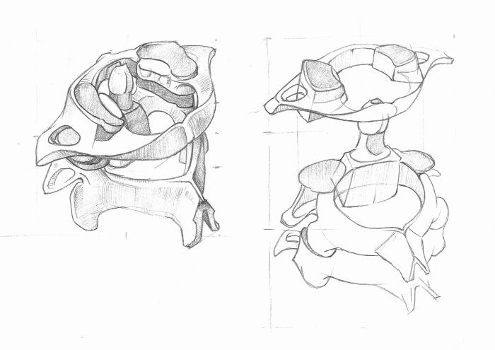 Anatomy Study - Spine