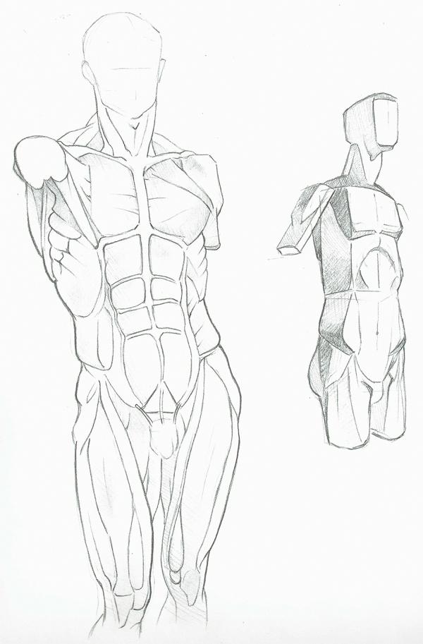Anatomy Study - Muscles