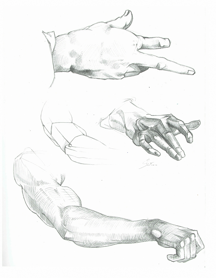Anatomy Study Syn Studio Sally Gottschalk Nigreda